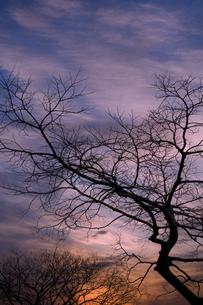 冬枯れの写真素材 [FYI00046693]