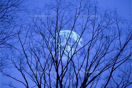 樹影の写真素材 [FYI00046699]
