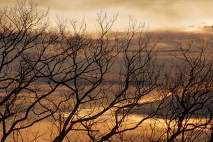 冬枯れの写真素材 [FYI00046700]