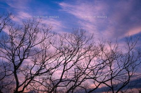 冬枯れの写真素材 [FYI00046702]