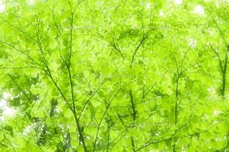 新緑の写真素材 [FYI00046836]