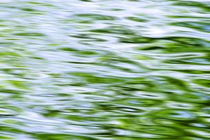 新緑の水面の写真素材 [FYI00046840]