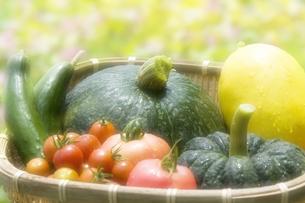 夏野菜の写真素材 [FYI00046852]
