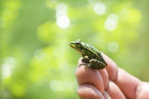 カエルの写真素材 [FYI00046865]