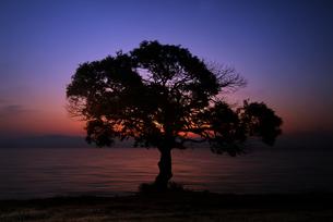 夜明けの湖畔の写真素材 [FYI00046869]
