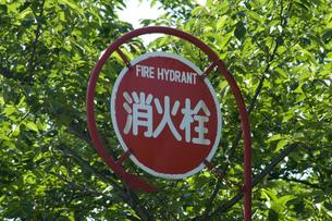 消火栓の写真素材 [FYI00046890]