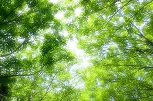 新緑の森の写真素材 [FYI00047179]