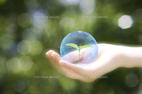 エコロジーの写真素材 [FYI00047371]