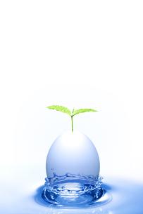 エコロジーの写真素材 [FYI00047745]