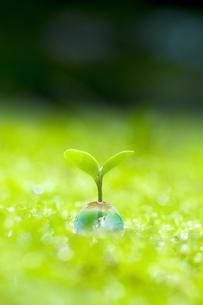 エコロジーの写真素材 [FYI00047814]