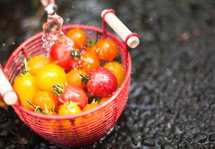 三色ミニトマトと湧水の写真素材 [FYI00048334]