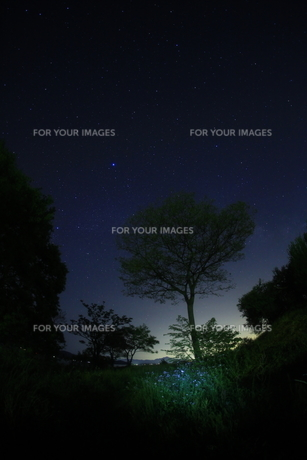 星空と草原の素材 [FYI00048387]