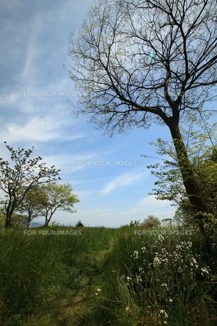 5月の琵琶湖畔の素材 [FYI00048389]