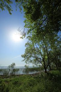 新緑の琵琶湖畔の素材 [FYI00048400]