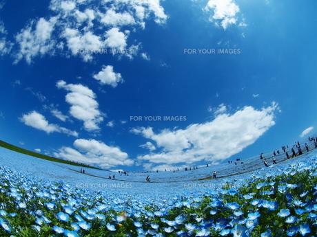 青い空と青い花の写真素材 [FYI00048479]