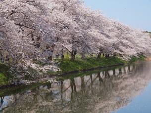 春満開の写真素材 [FYI00048496]
