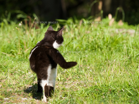 猫の後ろ姿の素材 [FYI00048580]