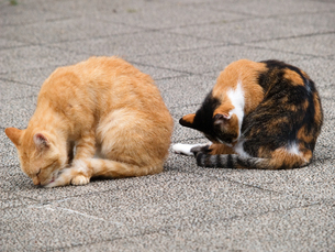 猫のシンクロの写真素材 [FYI00048616]