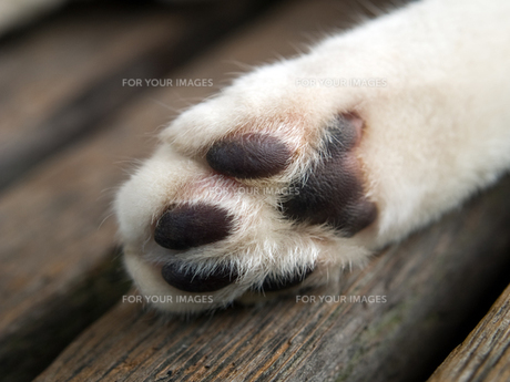 猫の手の写真素材 [FYI00048632]