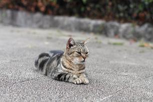 座った猫の写真素材 [FYI00048728]