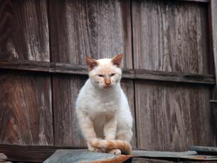 屋根の上の猫の写真素材 [FYI00048763]
