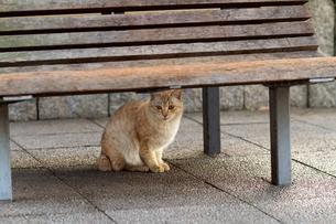 ベンチの下の猫の素材 [FYI00048834]