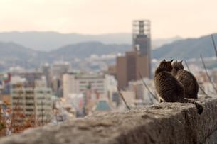 塀の上の子猫の素材 [FYI00048847]