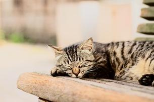 寝そべる猫の素材 [FYI00048968]