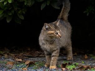野良の子猫の写真素材 [FYI00049040]