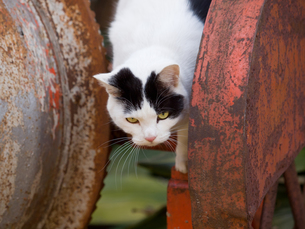 遊ぶ猫の写真素材 [FYI00049130]
