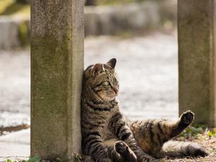 座った猫の写真素材 [FYI00049212]