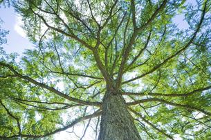 木の写真素材 [FYI00049291]