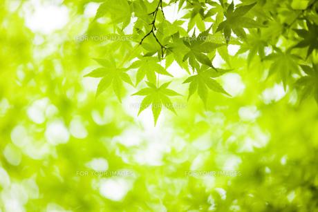 新緑の写真素材 [FYI00049684]