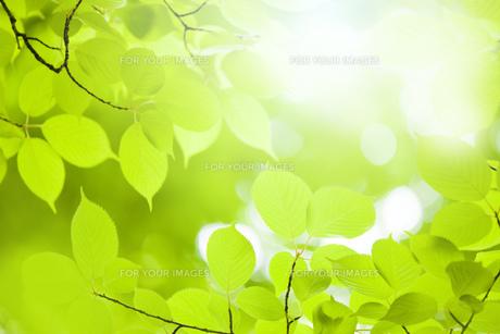 新緑の写真素材 [FYI00049694]