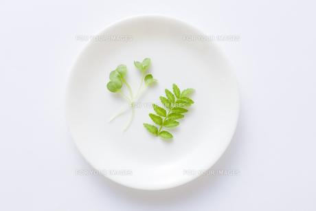 木の芽と貝割れの写真素材 [FYI00049803]