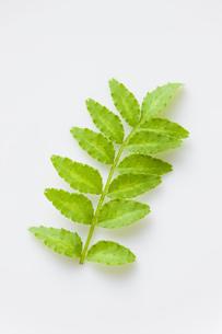 木の芽の写真素材 [FYI00049808]