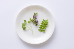 和風食材の写真素材 [FYI00049819]