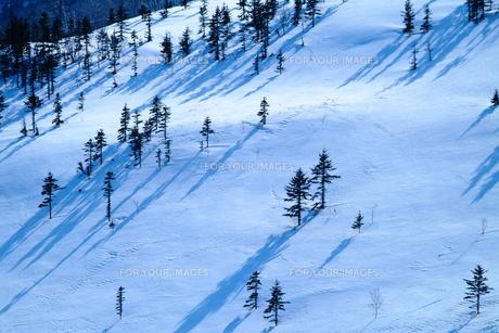 雪の斜面の写真素材 [FYI00049944]