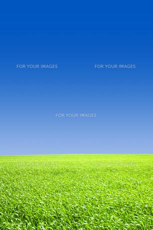 青空と草原の素材 [FYI00050028]