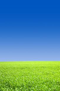 青空と草原の写真素材 [FYI00050028]