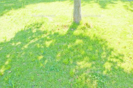 木陰の写真素材 [FYI00050113]