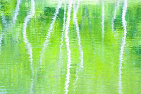 新緑の池の素材 [FYI00050227]