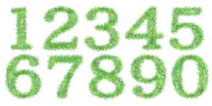 葉っぱの数字の写真素材 [FYI00050271]