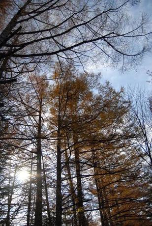 木漏れ日の素材 [FYI00050536]