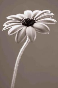 花の写真素材 [FYI00050545]
