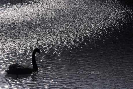 湖畔の光の素材 [FYI00050563]