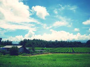 畑の風景の写真素材 [FYI00050772]
