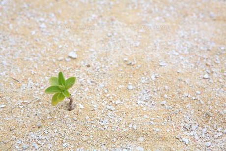 沖縄の砂浜の素材 [FYI00050816]