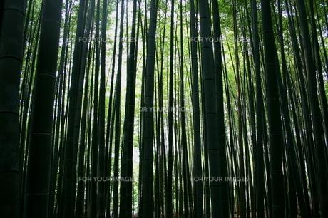 竹林の素材 [FYI00051062]