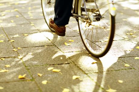 自転車と銀杏の写真素材 [FYI00051102]
